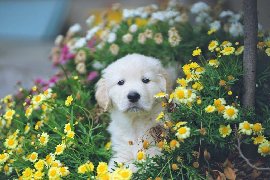 Clinica veterinaria Taco Tenerife alergia perros