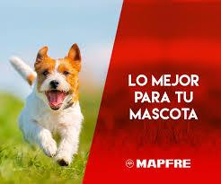 Seguro Mascotas Mapfre Veterinario Tenerife Taco
