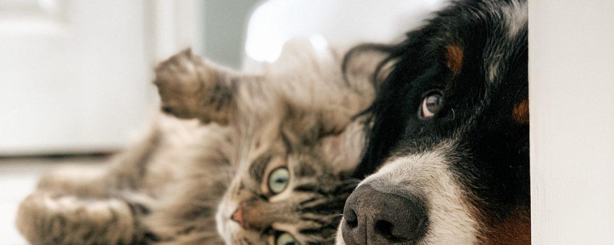 Adoptar Perro y gato Clinica Veterinaria Taco Tenerife