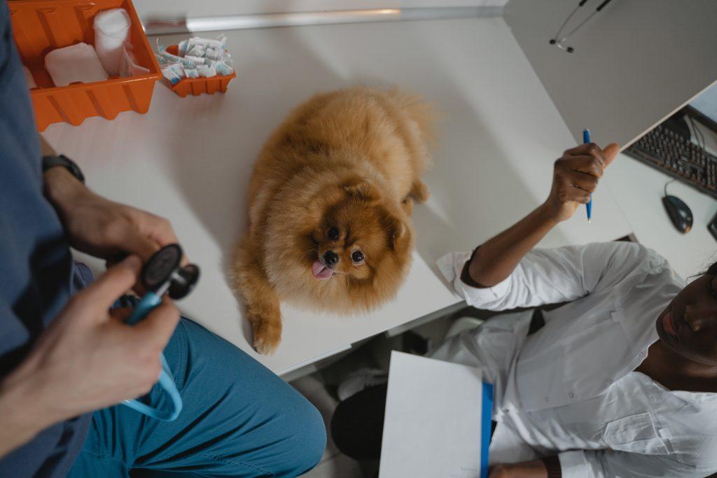 Mascota en el veterinario